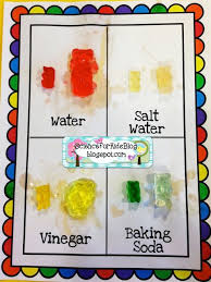 best scientific method experiments ideas  science for kids gummy bear science great for inroduction of variables great for intro to science fair projects
