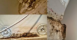 faulty stucco and mold problems