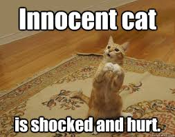 Innocent cat memes | quickmeme via Relatably.com
