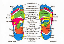 Reflexology For Ibs And Digestive Problems Magenta Therapy