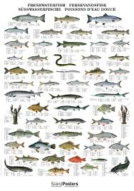Fish Chart Wiring Diagram