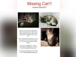 Lost Cat Flyer Womans Ad For Her Lost Jerk Cat In North Carolina Goes