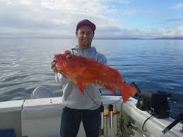 Rock Fish Lingcod Fishing Chinook Shores Lodge