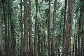 Livingston Quilt Trail — Louisiana Quilt Trail & awtyiy18hk4-jude-dias.jpg. Louisiana Quilt Trail Adamdwight.com