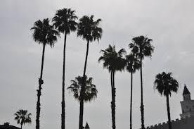 palm trees tumblr. Dsc 0012 Xww8wrs Home Design Palm Tree Photography Trees Tumblr Black And White White5 66y Wonderful