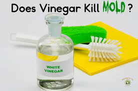 does vinegar kill mold mold help for you