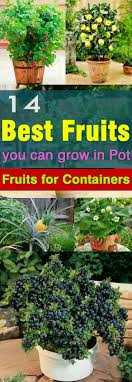 Kitchen Garden In Pots 17 Best Ideas About Container Vegetable Gardening On Pinterest