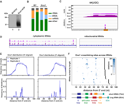Defining The Rna Interactome By Total Rna Associated Protein