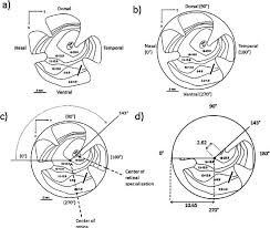 A Topographic Map Of The Retinal Ganglion Cell Distribution Of The
