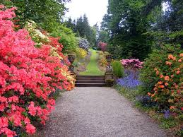 what a gorgeous path ornamented with colorful happy flowers i bet it s a pleasure to take a stroll through such a beautiful flower garden