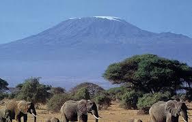 Kilimanjaro safari in, tanzania