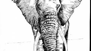 Image result for pen and ink techniques for animals