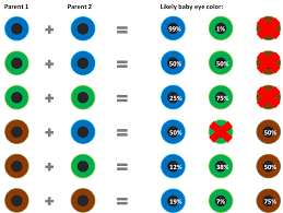 Eye Genetics Chart Baby Eye Color Chart According To Genetics What Are The Odds