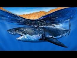 great white shark painting. Plain Great Speed Painting A GREAT WHITE SHARK For Great White Shark