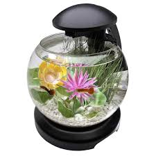best fish for office desk home office furniture