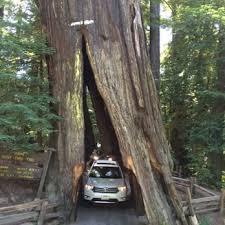 photo of shrine drive thru tree meyers flat ca united states