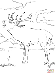Small Picture Red Deer coloring page Free Printable Coloring Pages