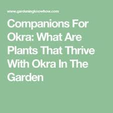 Okra Companion Plants Learn About Companion Planting With