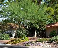 Small Picture 99 best Water Saving Gardens images on Pinterest Garden ideas