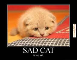 These Are The Saddest Cats On The Internet - FunnyMemes.com via Relatably.com
