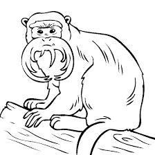 as well  besides Gorilla Coloring Pages   GetColoringPages likewise Tarzan of the apes coloring pages   Free Coloring Pages as well Tarzan Coloring Page   Coloring Pages of Epicness   Pinterest furthermore  also  in addition Gorilla to Veterinarian   Are you my friend   coloring page   Free additionally 289 best Colouring Pages images on Pinterest   Coloring books moreover 22 best Ivan images on Pinterest   Gorilla craft  Ivan the gorilla in addition Gorilla 7 coloring page   Free Printable Coloring Pages. on printable coloring pages gorilla silowet