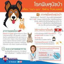 โรคพิษสุนัขบ้า หรือ โรคกลัวน้ำ - รพ.สต.บ้านคลอง 17