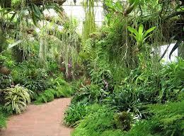 university of south florida botanical garden in tampa