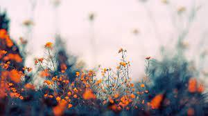 Aesthetic Flower Desktop Wallpapers ...