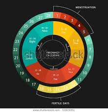 Pregnancy Callendar Pregnancy Calendar Menstrual Pregnancy Cycle Graphic Stock
