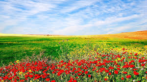 ... Garden Design with Flowers wallpapers WallpaperUP with Flowers For  Landscaping from wallpaperup.com