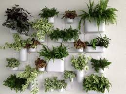 Indoor Wall Planters Best 25 Indoor Wall Planters Ideas On Pinterest Herb  Wall