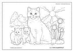 Stwórz piękny obrazek kolorując podane wzory. Kolorowanki Koty Rasy Kotow Superkid