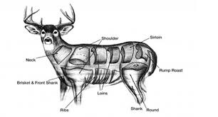 Wild Game Meat Cutting Chart Diagram For Butchering A Deer Diagram For Butchering A Deer