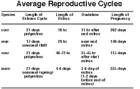 Lecture 9 Estrous Cycles