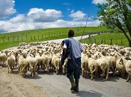 Αποτέλεσμα εικόνας για τσοπάνος πρόβατα