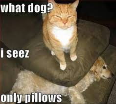 funny cats and dogs pictures | Funny | Pinterest | Funny Cats ... via Relatably.com