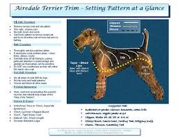 Airedale Weight Chart Helpful Chart Maybe Now The Groomer Will Stop Leaving Our