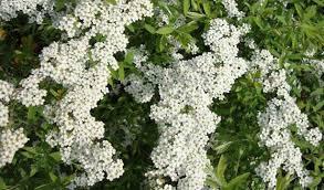 Le composizioni floreali sono quel tocco in più che spesso manca in una casa: Fiori Bianchi Da Giardino Idee Green