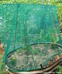 Container Garden Ideas For Shade