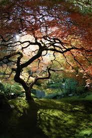 The Art of the Japanese Garden (7)