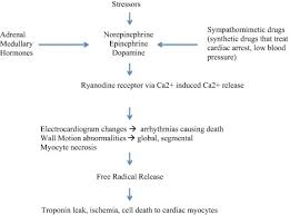 Elevated Troponin In Patients With Acute Stroke Is It A