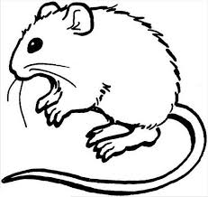 Small Picture Hairy Mouse and Rat Coloring Pages Bulk Color