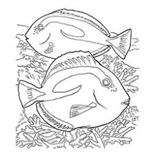 Small Picture Top 10 Coral Coloring Pages For Toddler