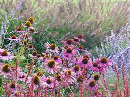 Zonnehoed Met Lampenpoetsersgras Tuincursus Tuin Pinterest