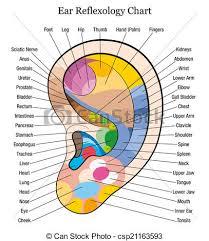 Foot Organ Chart Ear Reflexology Chart Description W