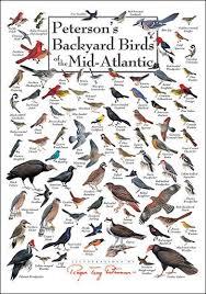 Mid Atlantic Backyard Birds Chart Birds Bird
