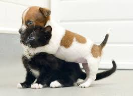kittens and puppies wallpaper.  Puppies Kittens And Puppies Wallpaper Desktop   Pet Animals  6