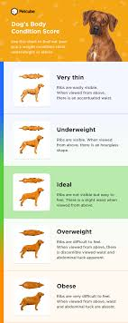 A Chart Of Dogs Obesity In Dogs Causes Risks Treating And Choosing A Dog