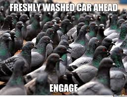 Image result for funny pigeons