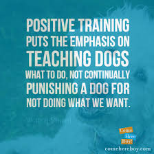 Training Quotes Fascinating 48 Quotes That Inspire Us To Train Dogs Positively ComeHereBoy